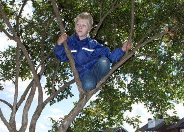 boomklimmen bij BSO De Toverhoed Naarden